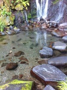 庭にあった滝